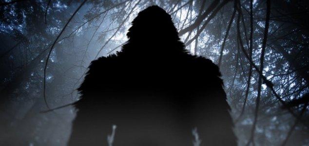Mystery primate terrorizes Texas residents 9