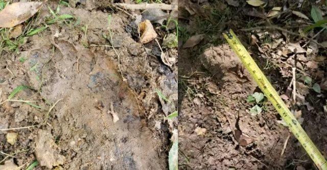 Bigfoot prints found in western North Carolina? 14