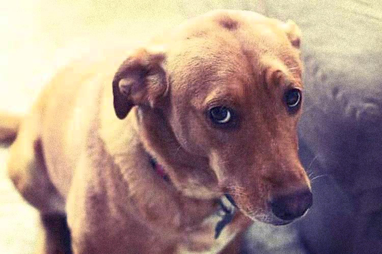 House Unanimously Passes Bill Making Animal Cruelty a Federal Felony 1