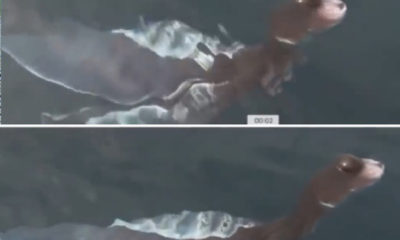 Plesiosaurus Cub? In Thailand, a very strange creature was photographed in water 86