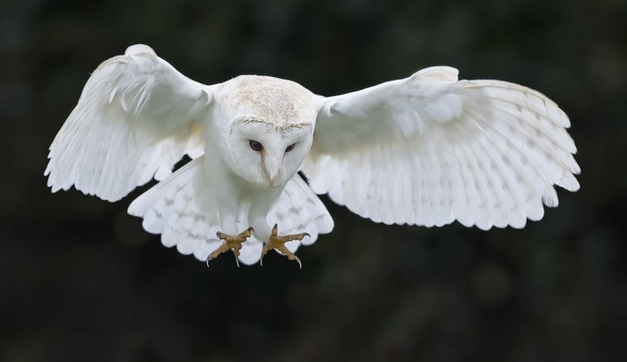 The Strange Link between White Owls, UFOs and Aliens 7