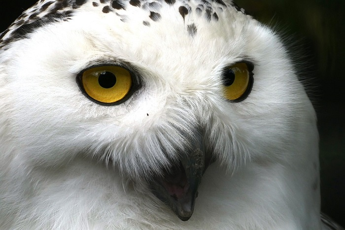 The Strange Link between White Owls, UFOs and Aliens 9