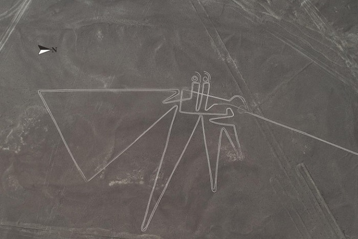 More than 140 new geoglyphs have been discovered in the Nazca Desert 111