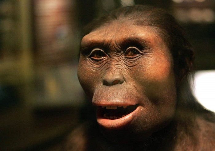 Australopithecines were less intelligent than modern apes 8