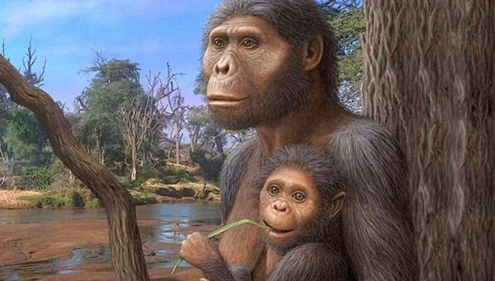 Australopithecines were less intelligent than modern apes 94