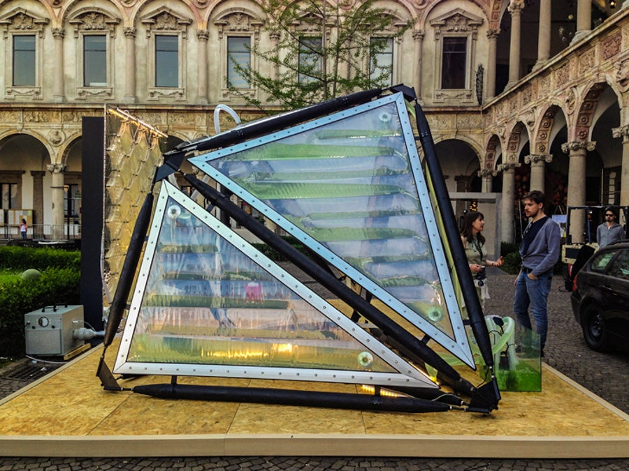 This Algae Canopy Produces The Same Amount Of Oxygen As Four Hectares Of Woodland 32
