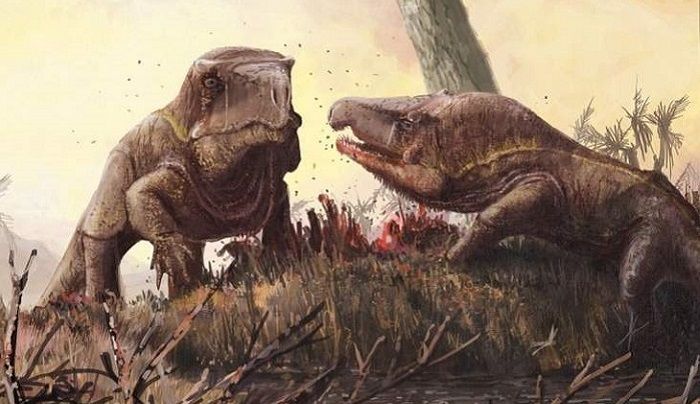 250 million years ago, extraordinary Garinia lived with huge heads 9