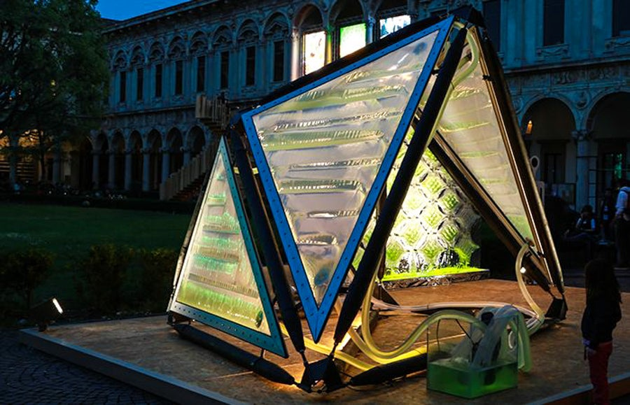 This Algae Canopy Produces The Same Amount Of Oxygen As Four Hectares Of Woodland 34