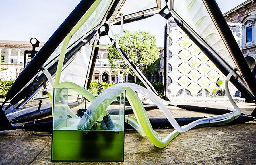This Algae Canopy Produces The Same Amount Of Oxygen As Four Hectares Of Woodland 28