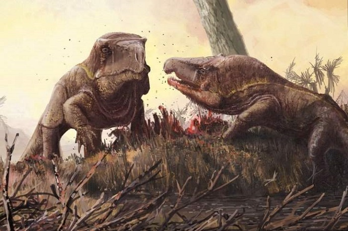 250 million years ago, extraordinary Garinia lived with huge heads 10