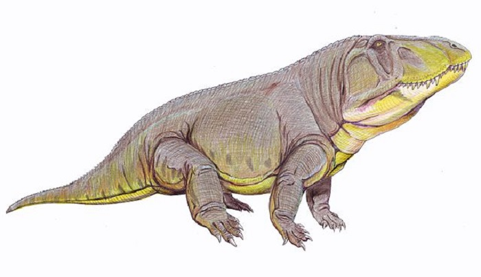 250 million years ago, extraordinary Garinia lived with huge heads 96