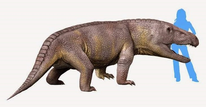250 million years ago, extraordinary Garinia lived with huge heads 98