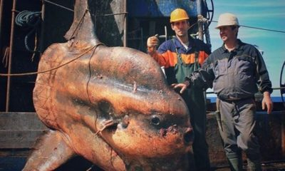 MONSTERS OF THE DEEP Russian fisherman posts terrifying pics of his weird deep sea finds 95
