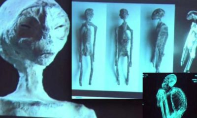 Update on the Nazca 3-Finger Mummies Scientific Study 93