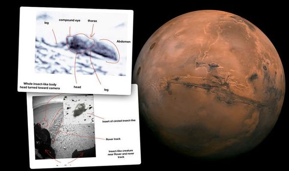 University excludes press release alleging evidence of insects on Mars