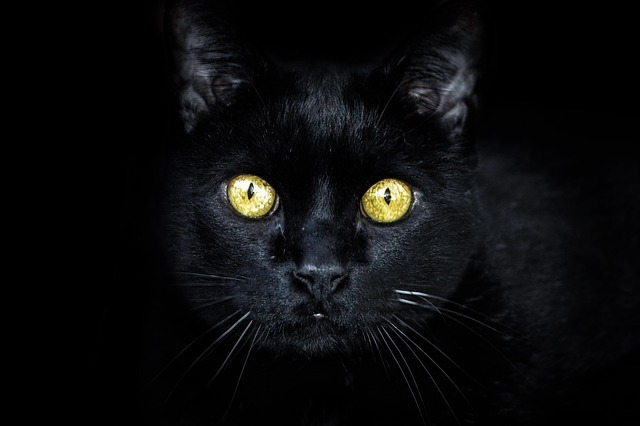 Black Cats and Witches 89