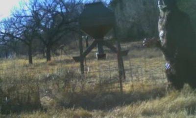 Baseball star captures 'Bigfoot' on deer cam 86