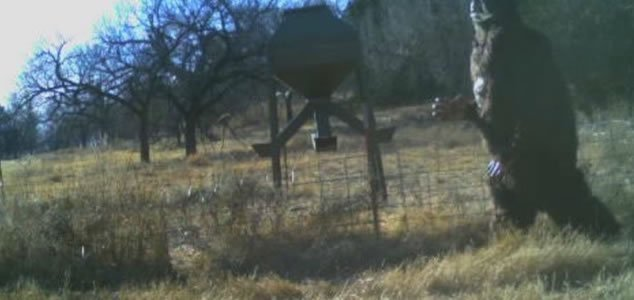 Baseball star captures 'Bigfoot' on deer cam 13