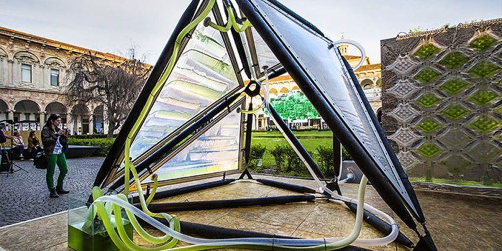 This Algae Canopy Produces The Same Amount Of Oxygen As Four Hectares Of Woodland 23