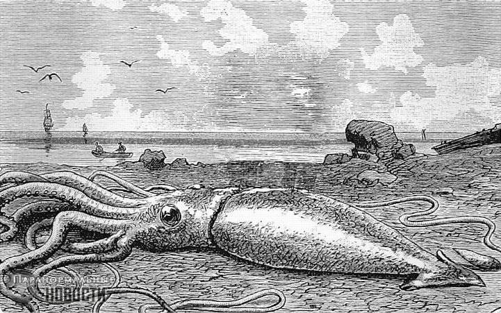 Encounters with giant squid 95