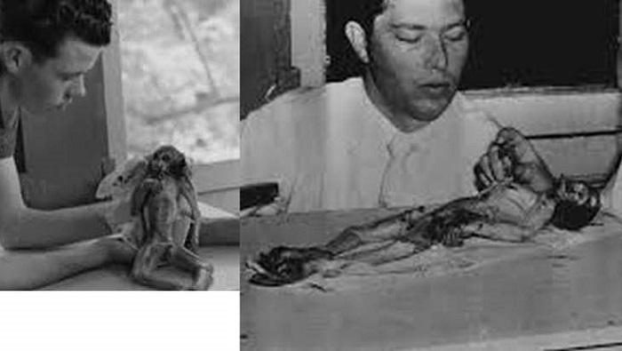 The Alien Monkey Case 10