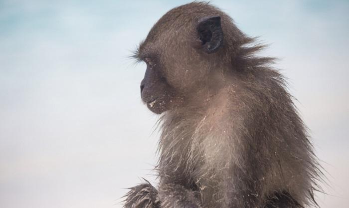 The Alien Monkey Case 9