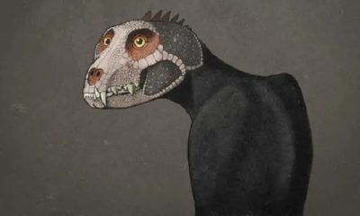 The dinosaurs probably looked very different 91