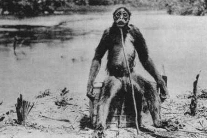 De Loys' Ape: Does This Cryptid Exist? 88