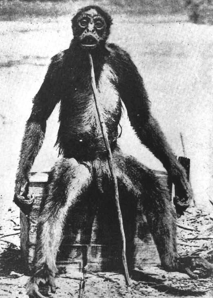 De Loys' Ape: Does This Cryptid Exist? 89