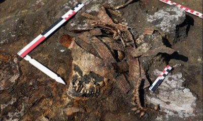 Scythian burial with golden headdress found in Russia 105