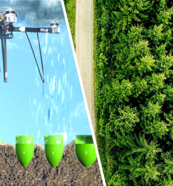 "Scientists will plant one billion trees using drones and ""secret"" ingredients 87"