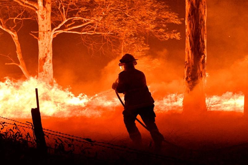 Australia: 50 percent of Koalas died in fires