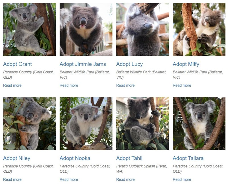 You can volunteer in Australia and help hundreds of animals 12