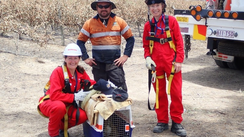 You can volunteer in Australia and help hundreds of animals 11