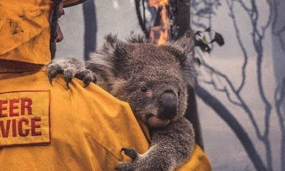 You can volunteer in Australia and help hundreds of animals 87