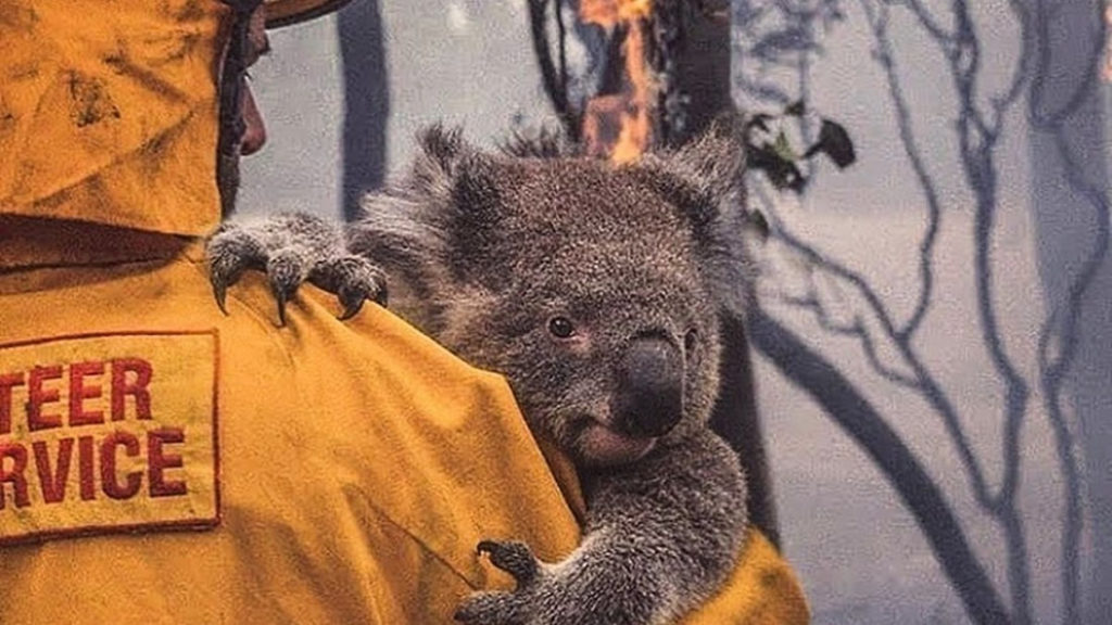 You can volunteer in Australia and help hundreds of animals 9