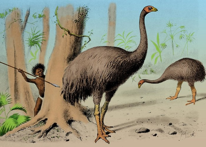 Eyewitnesses say they saw the extinct huge Moa 12