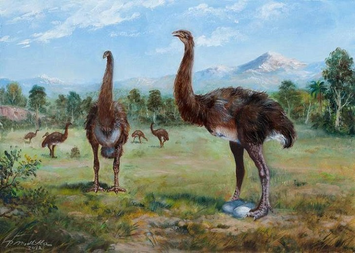 Eyewitnesses say they saw the extinct huge Moa 13
