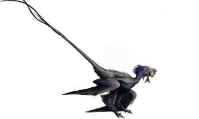 A previously unknown species of winged dinosaur very similar to a dragon discovered in China 91