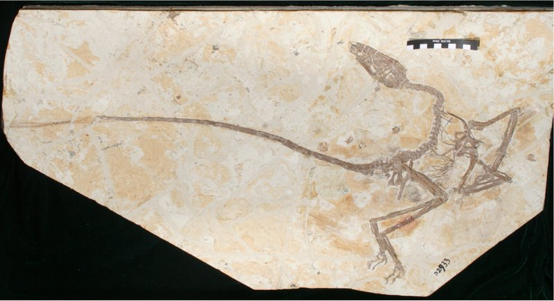 A previously unknown species of winged dinosaur very similar to a dragon discovered in China 4