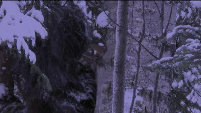 Bigfoot filmed in Canadian National Park 10
