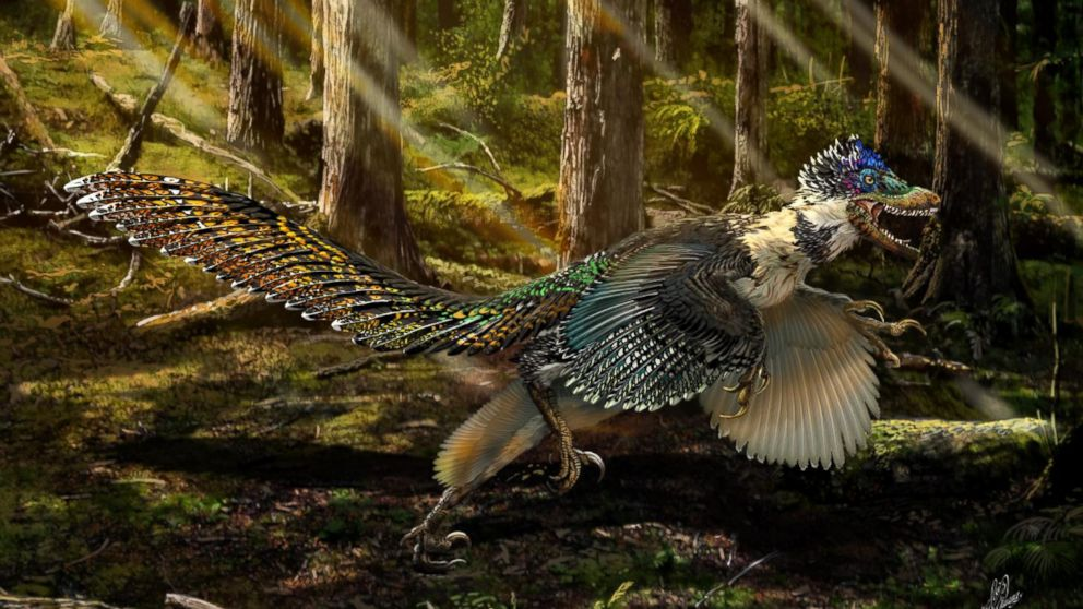 A previously unknown species of winged dinosaur very similar to a dragon discovered in China 5