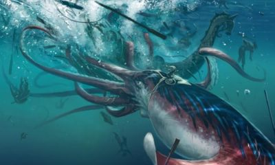 Scientists decoded the giant squid genome and saw that this creature has a very developed brain 96