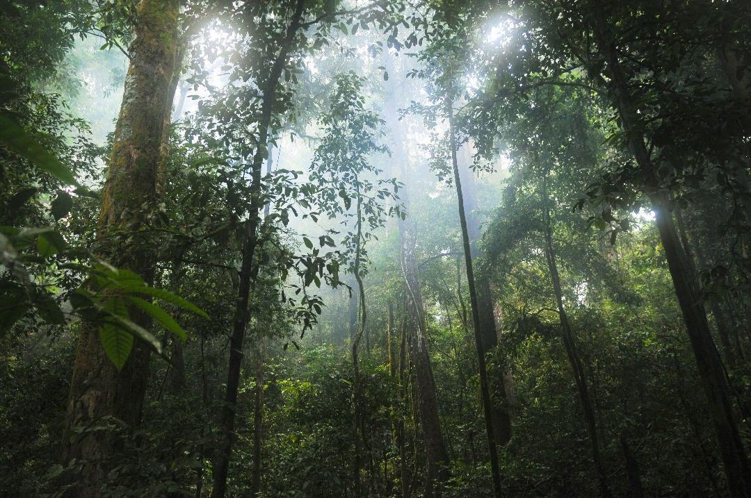 "Картинки по запросу ""selva de la india"""