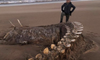 In Scotland, Hurricane Chiara brought ashore the skeleton of a mysterious creature 89