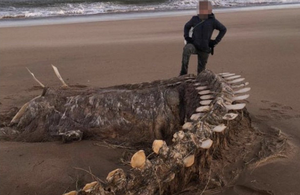 In Scotland, Hurricane Chiara brought ashore the skeleton of a mysterious creature 13