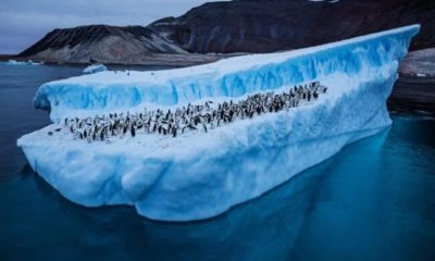 How much snow has melted due to record high temperatures in Antarctica? 91