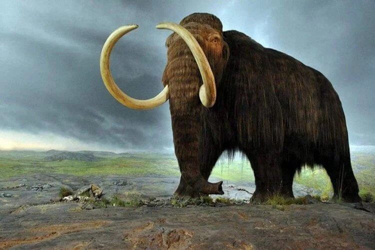 "Scientists ""revived"" the genes of mammoths 90"