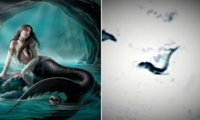 A creature assembling a Mermaid discovered in Antarctica: Google Earth user provides evidence 93