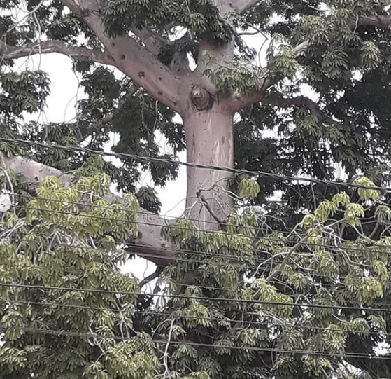 """The """"Tree of Jesus"""" was discovered in Colombia. A Divine sign? 3"""